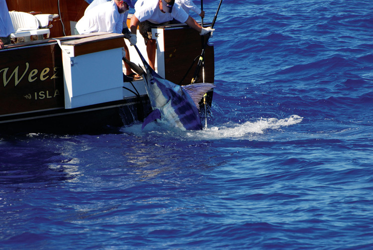 Bermuda sport fishing