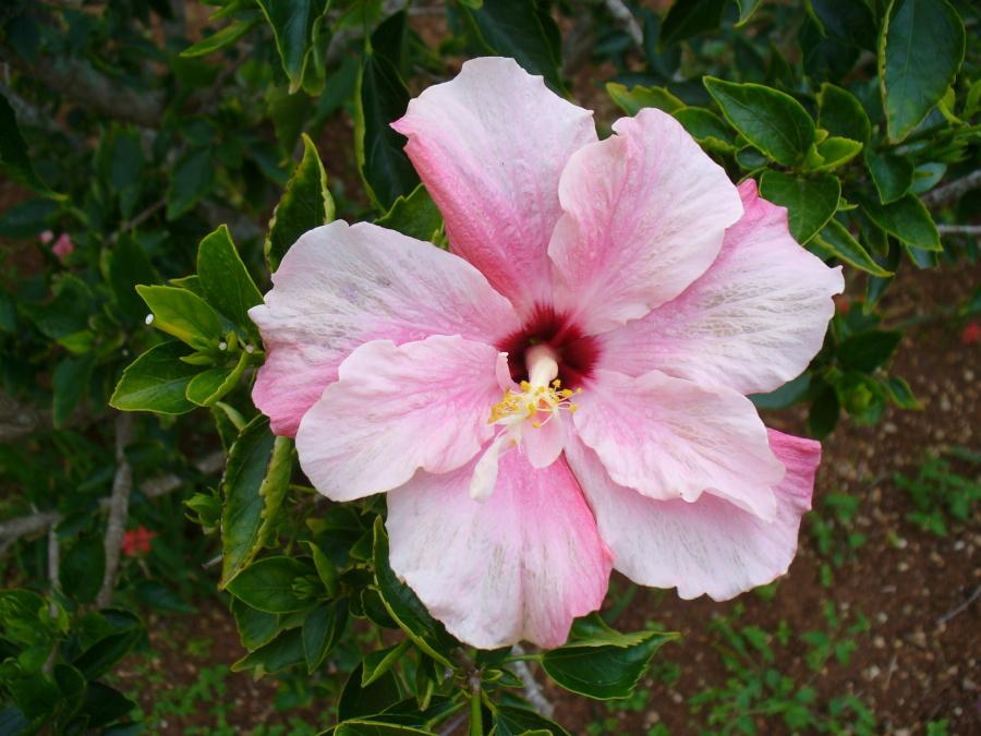 Bermudas Flora